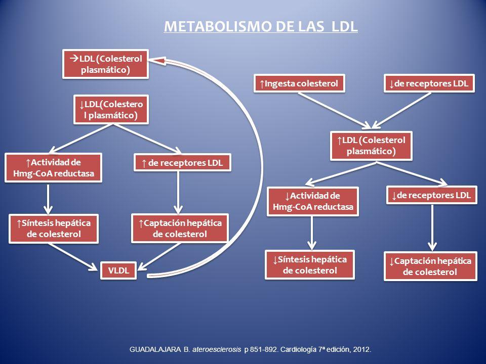 METABOLISMO DE LAS LDL LDL (Colesterol plasmático)