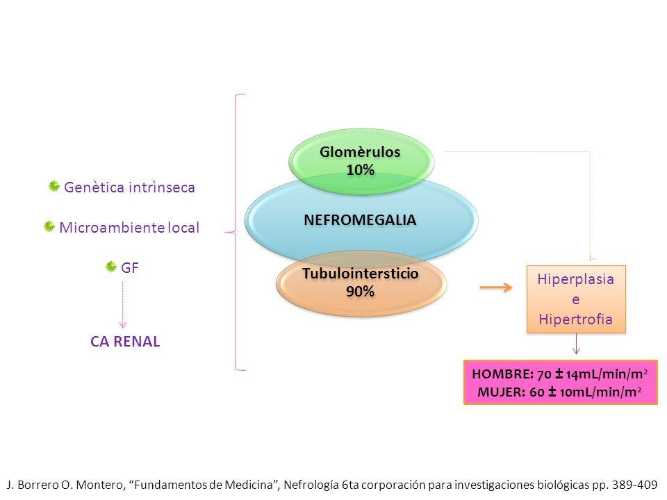 Hiperplasia e Hipertrofia