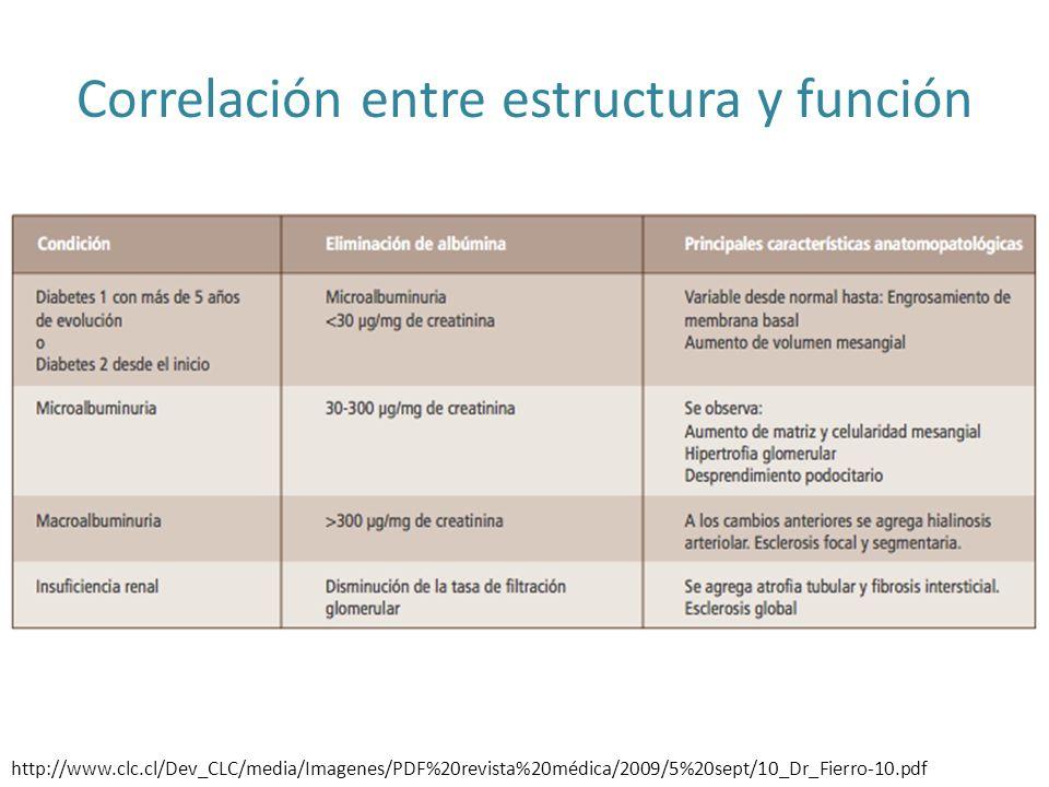 Correlación entre estructura y función