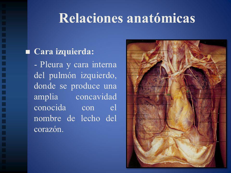 Relaciones anatómicas