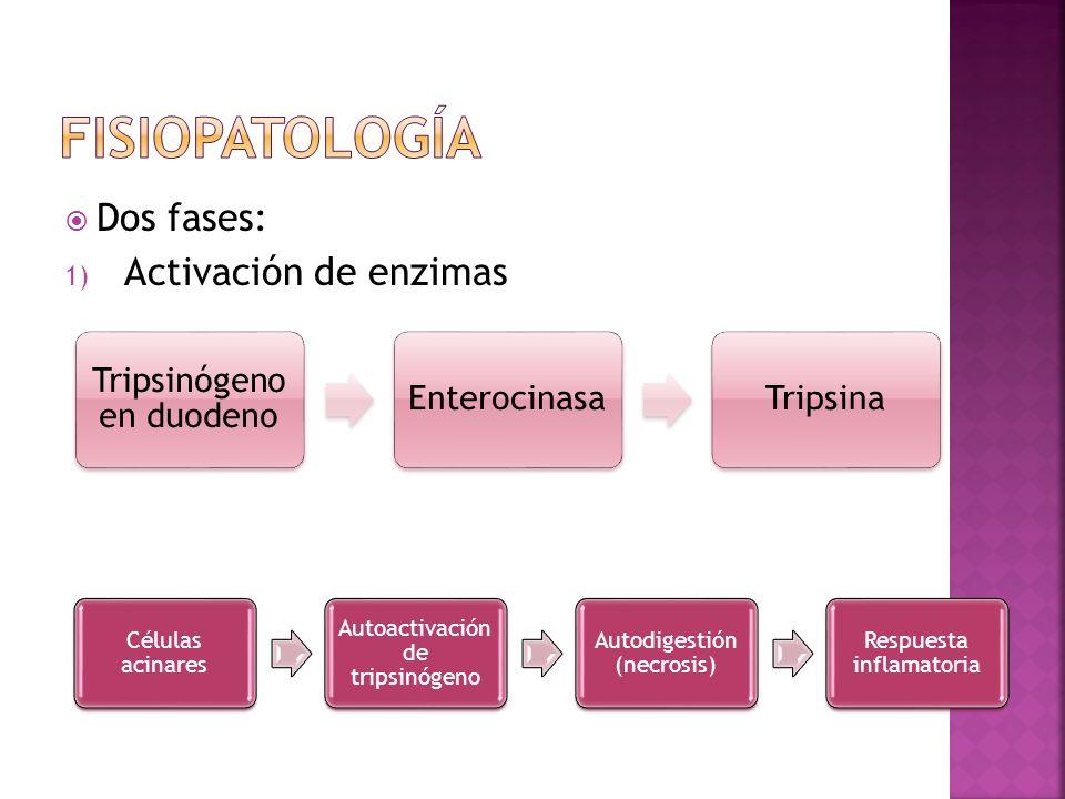 Fisiopatología Dos fases: Activación de enzimas