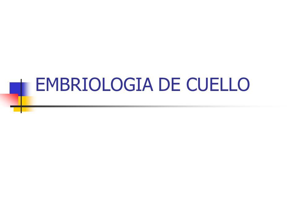 EMBRIOLOGIA DE CUELLO