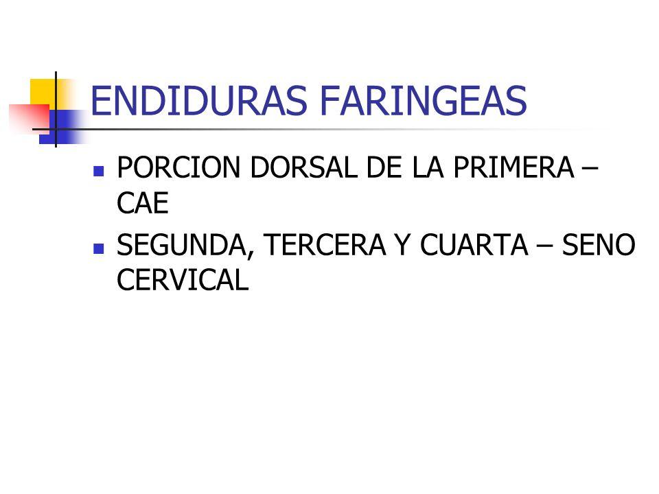ENDIDURAS FARINGEAS PORCION DORSAL DE LA PRIMERA – CAE