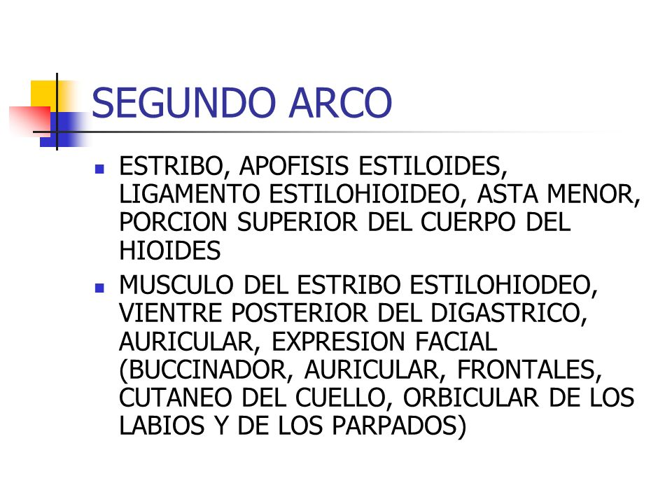 SEGUNDO ARCO ESTRIBO, APOFISIS ESTILOIDES, LIGAMENTO ESTILOHIOIDEO, ASTA MENOR, PORCION SUPERIOR DEL CUERPO DEL HIOIDES.