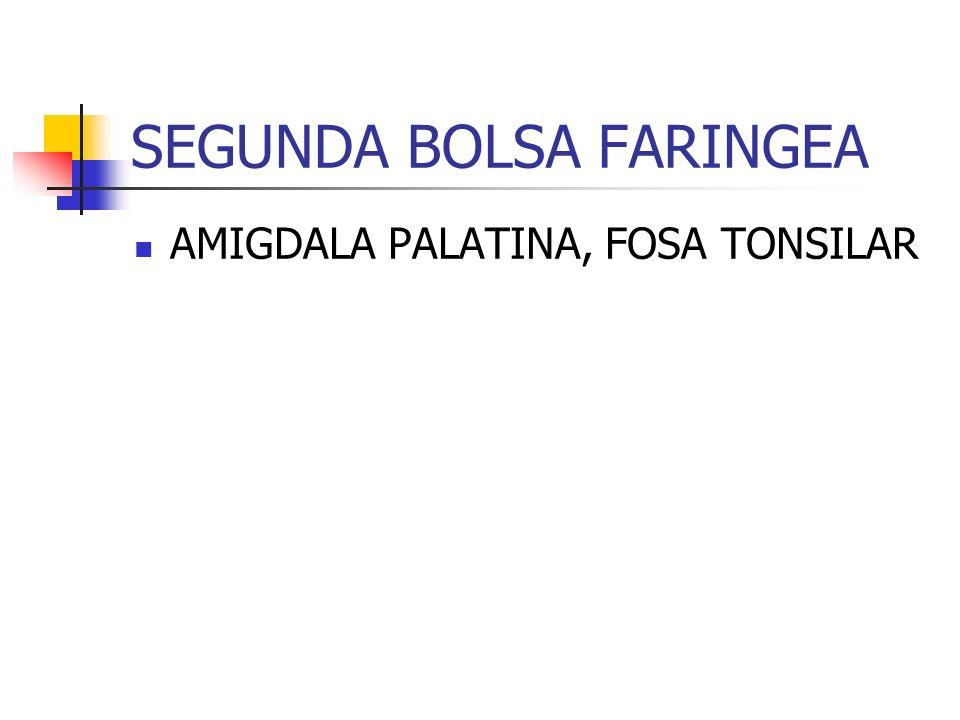 SEGUNDA BOLSA FARINGEA