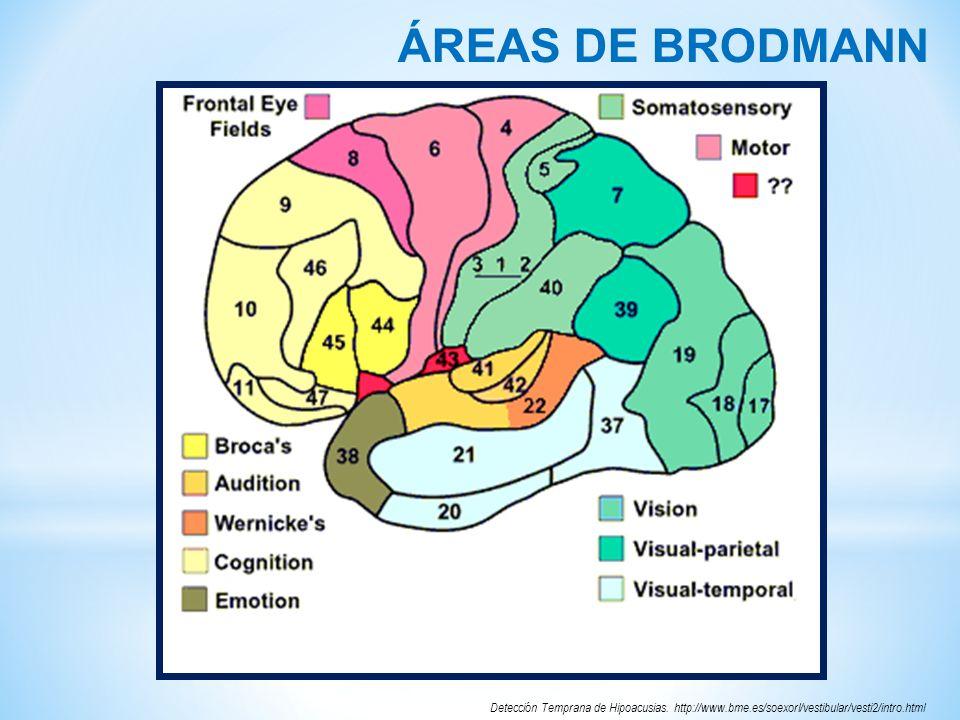 ÁREAS DE BRODMANNDetección Temprana de Hipoacusias.