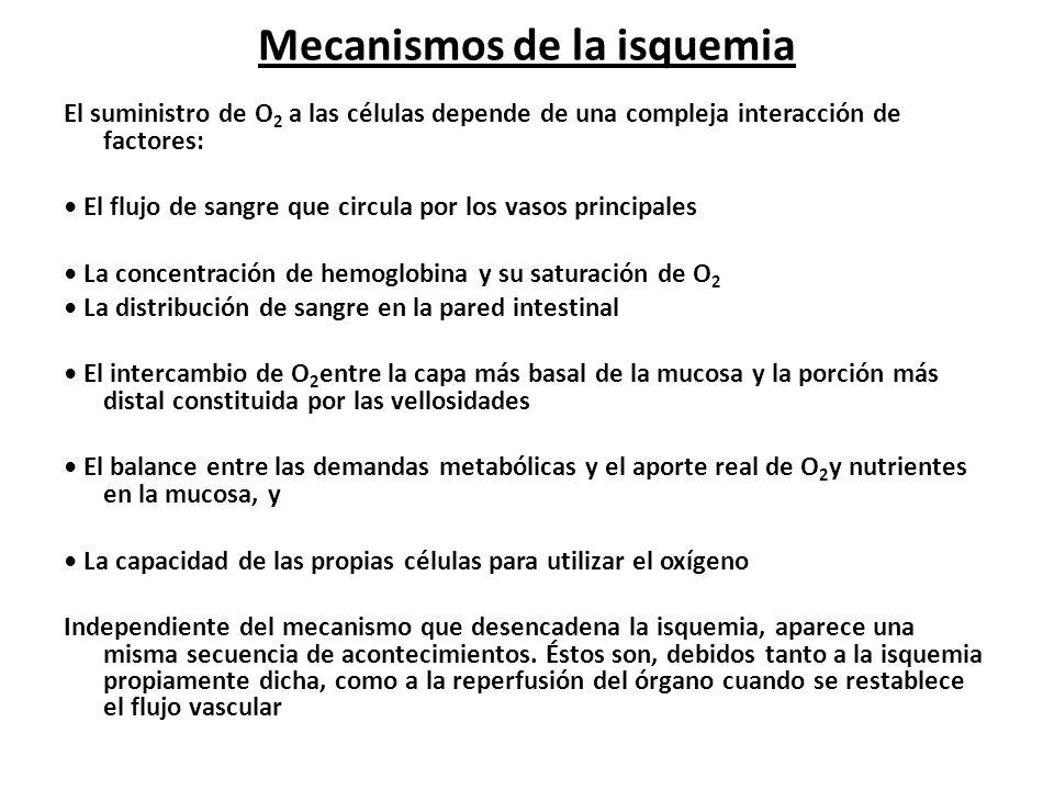 Mecanismos de la isquemia