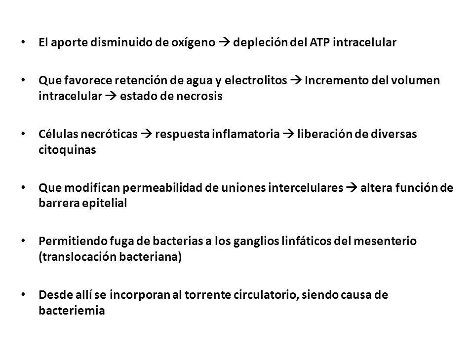 El aporte disminuido de oxígeno  depleción del ATP intracelular