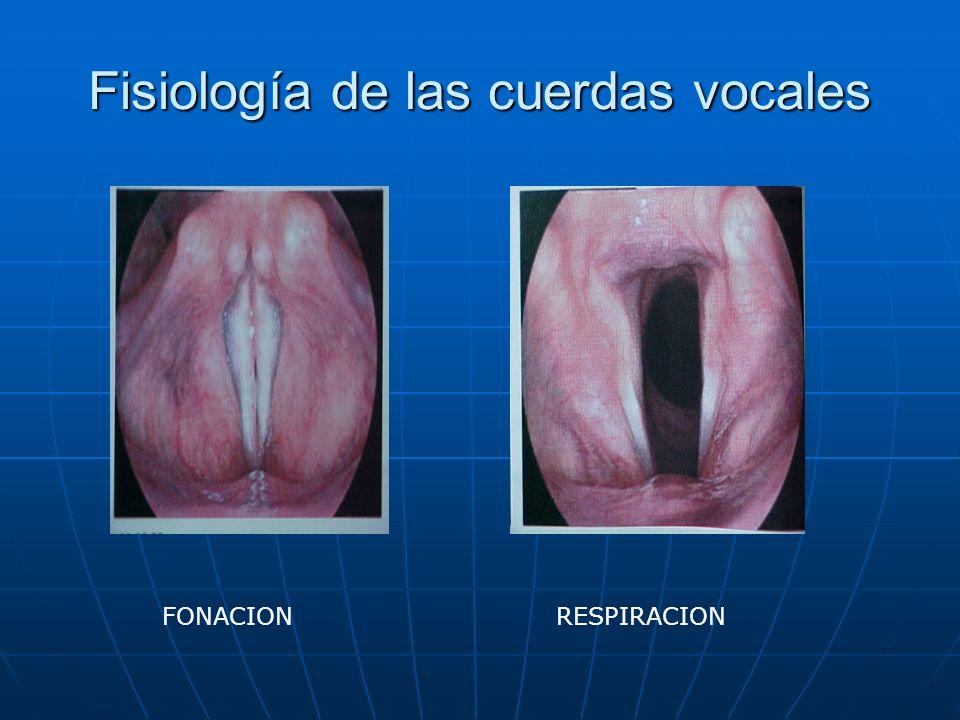 Fisiología de las cuerdas vocales