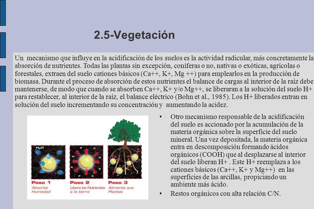 2.5-Vegetación