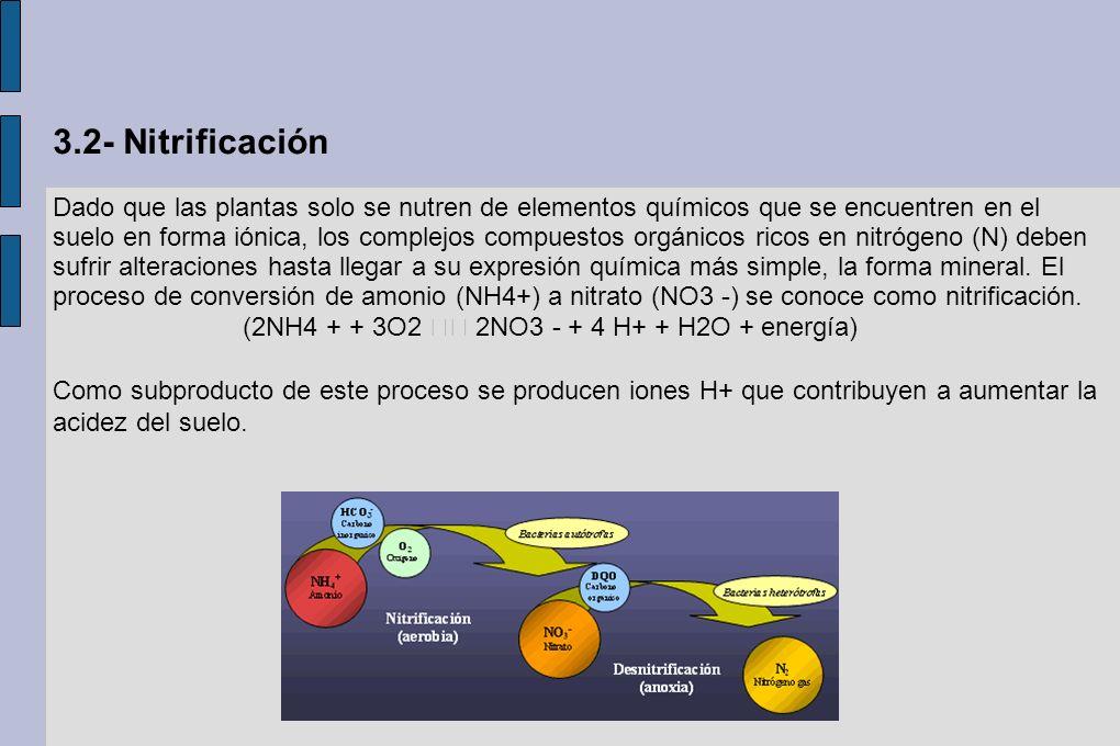 3.2- Nitrificación