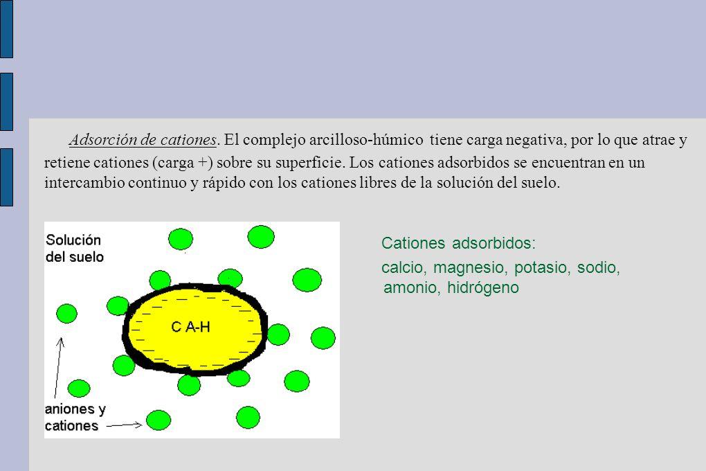 Adsorción de cationes. El complejo arcilloso-húmico tiene carga negativa, por lo que atrae y retiene cationes (carga +) sobre su superficie. Los cationes adsorbidos se encuentran en un intercambio continuo y rápido con los cationes libres de la solución del suelo.