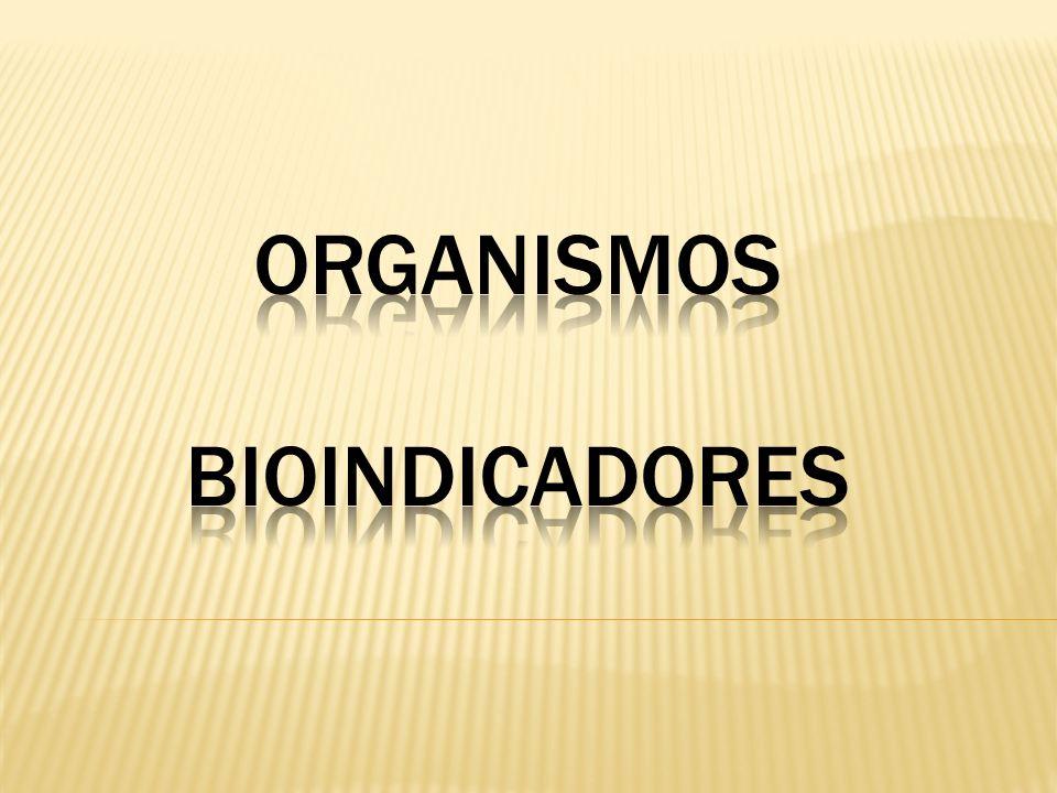 ORGANISMOS BIOINDICADORES