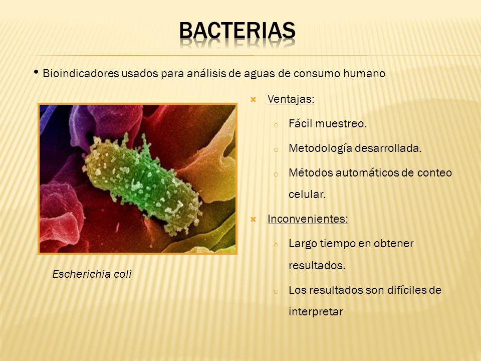 BACTERIASBioindicadores usados para análisis de aguas de consumo humano. Ventajas: Fácil muestreo. Metodología desarrollada.
