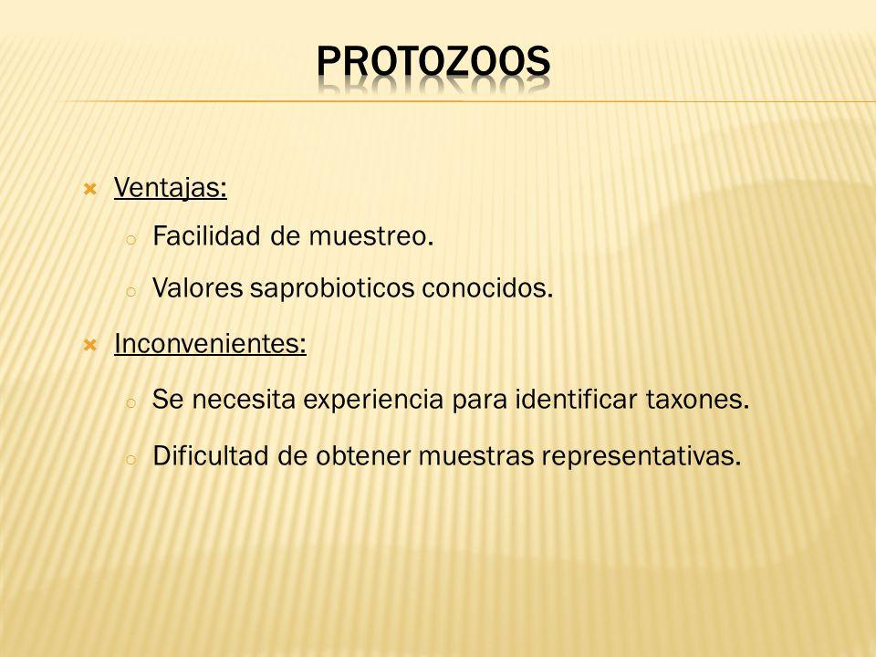PROTOZOOS Ventajas: Facilidad de muestreo.