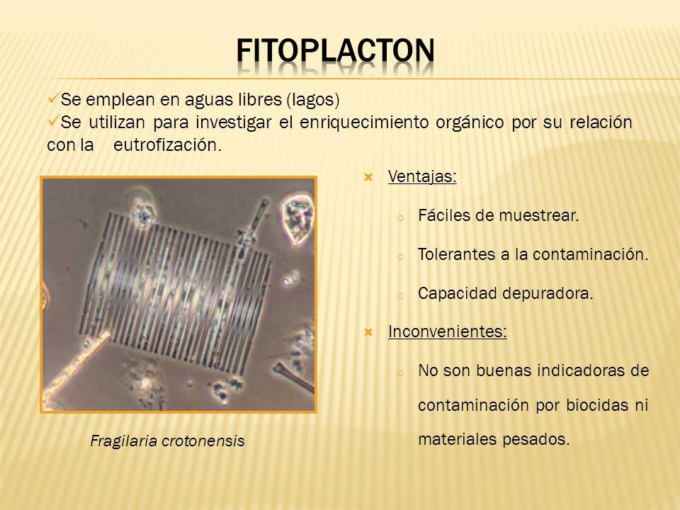 FITOPLACTON Se emplean en aguas libres (lagos)