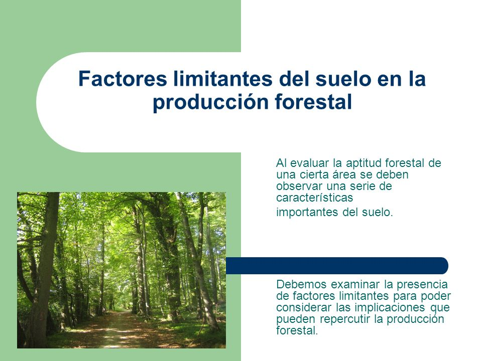 factores limitantes del suelo en la producci n forestal