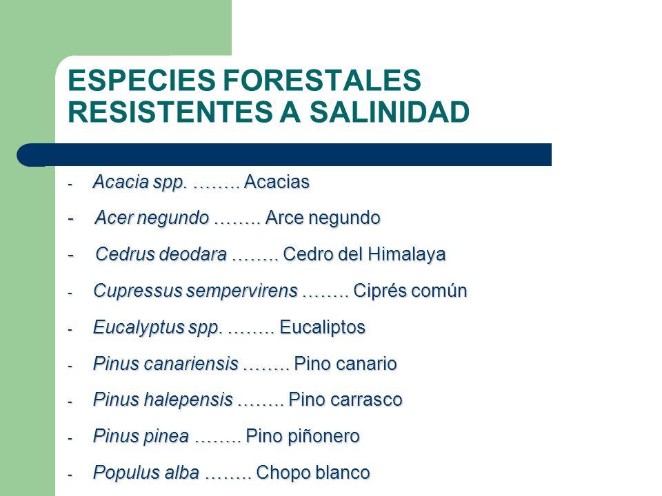 ESPECIES FORESTALES RESISTENTES A SALINIDAD
