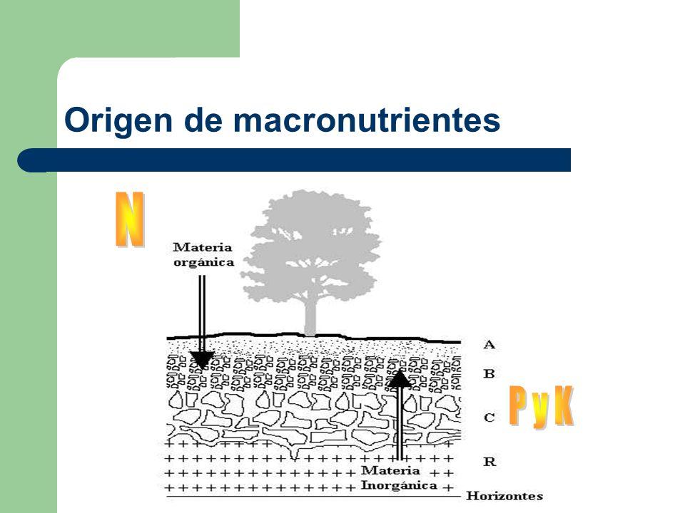 Origen de macronutrientes