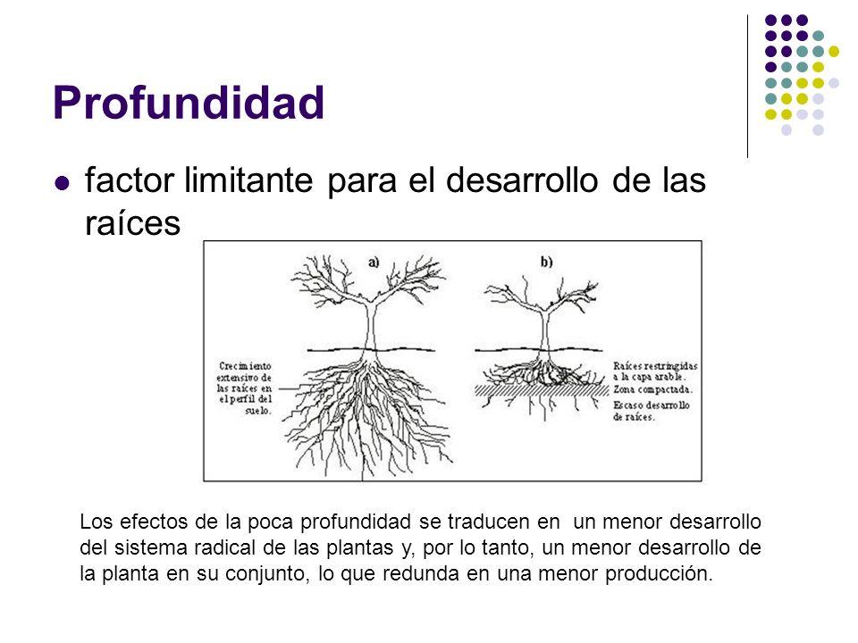 Profundidad factor limitante para el desarrollo de las raíces