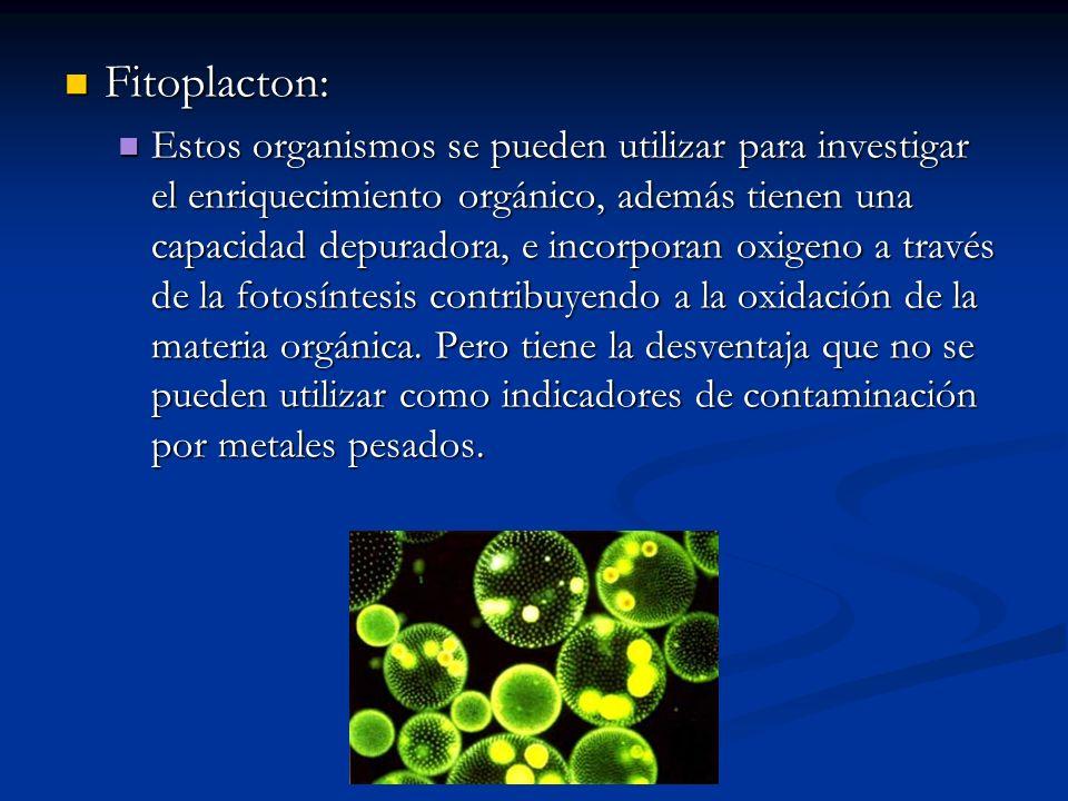 Fitoplacton: