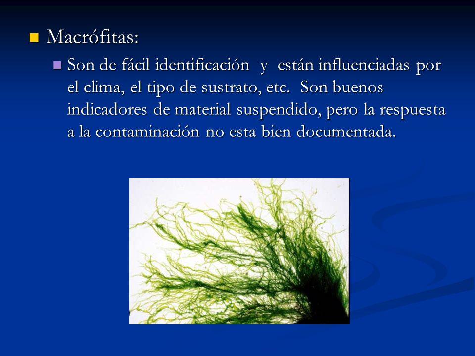 Macrófitas: