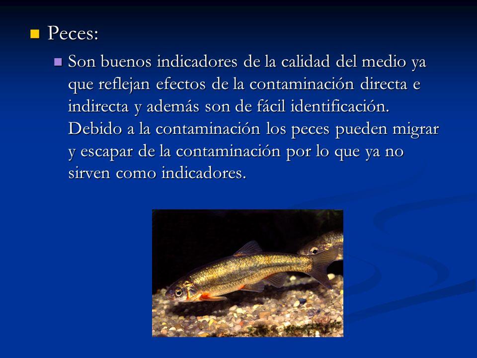 Peces: