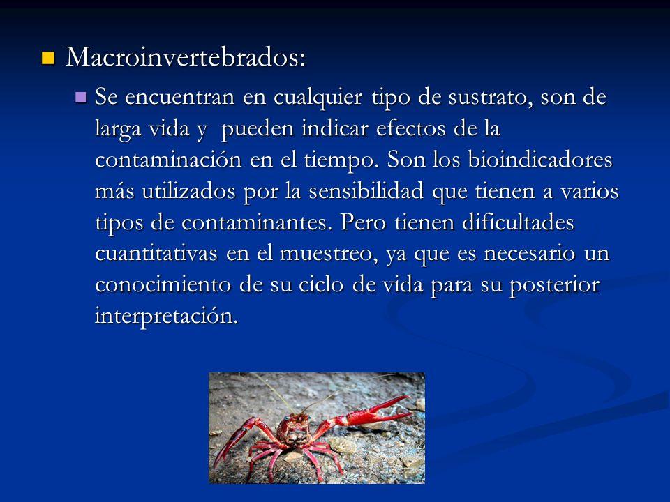 Macroinvertebrados: