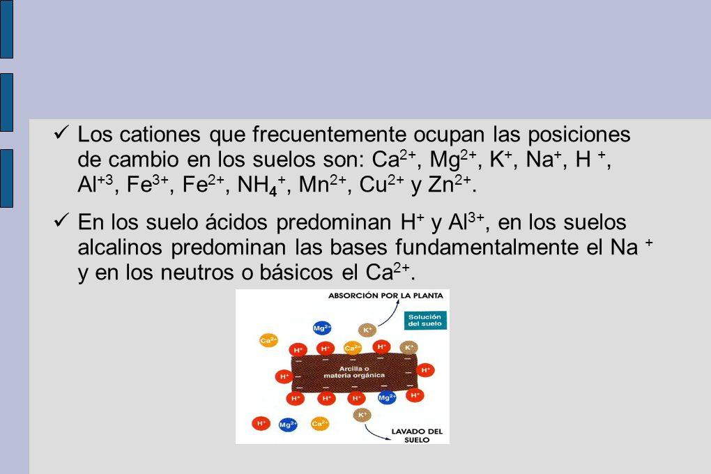 Los cationes que frecuentemente ocupan las posiciones de cambio en los suelos son: Ca2+, Mg2+, K+, Na+, H +, Al+3, Fe3+, Fe2+, NH4+, Mn2+, Cu2+ y Zn2+.