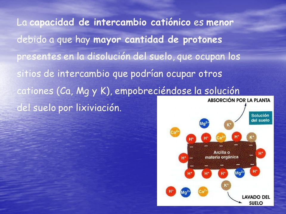 La capacidad de intercambio catiónico es menor debido a que hay mayor cantidad de protones presentes en la disolución del suelo, que ocupan los sitios de intercambio que podrían ocupar otros cationes (Ca, Mg y K), empobreciéndose la solución del suelo por lixiviación.