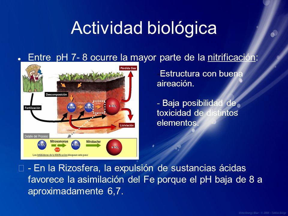 Actividad biológica Entre pH 7- 8 ocurre la mayor parte de la nitrificación:
