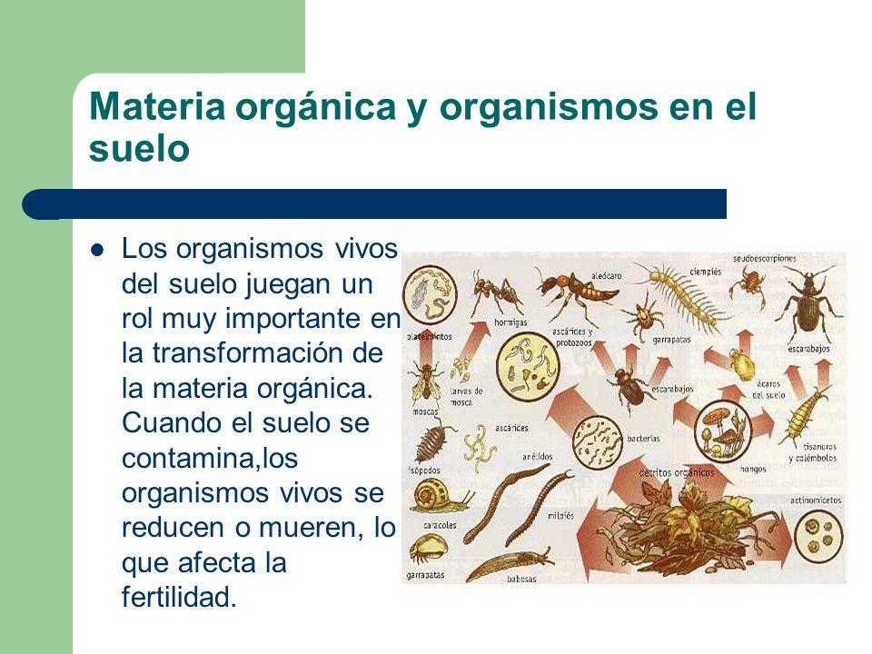Materia orgánica y organismos en el suelo
