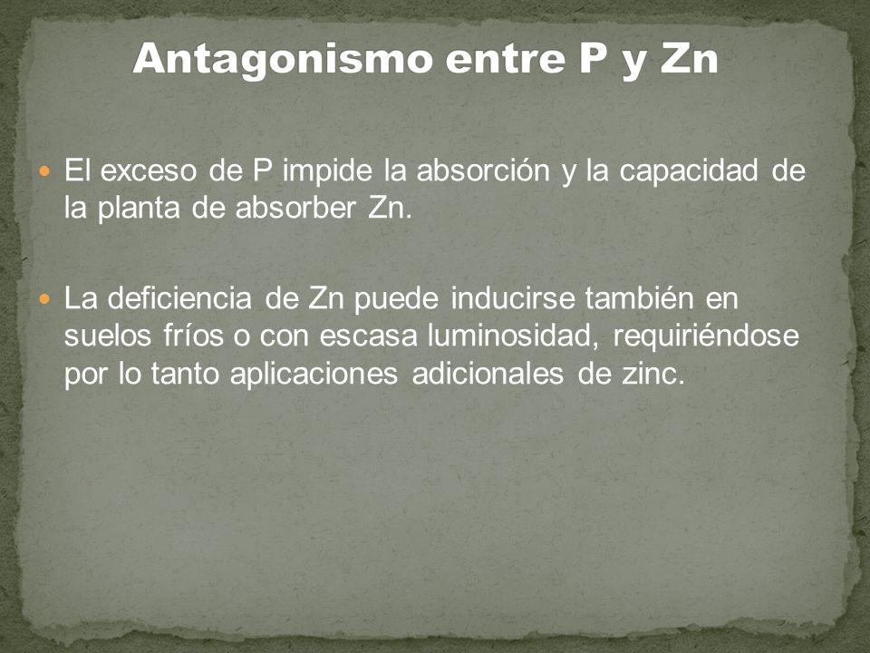 Antagonismo entre P y Zn