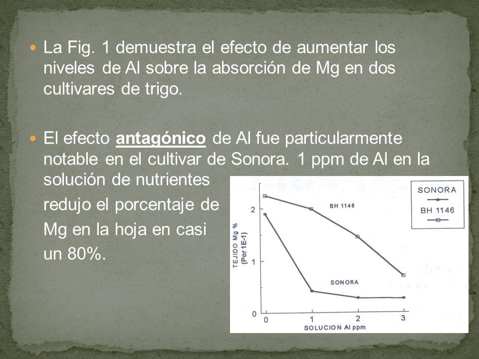 La Fig. 1 demuestra el efecto de aumentar los niveles de Al sobre la absorción de Mg en dos cultivares de trigo.