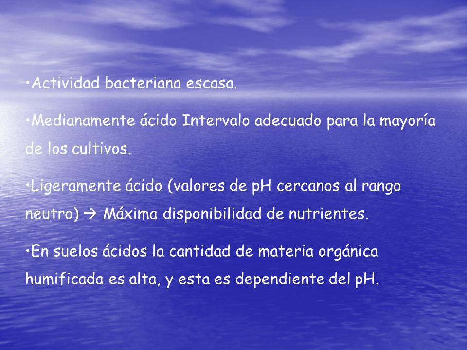 Actividad bacteriana escasa.