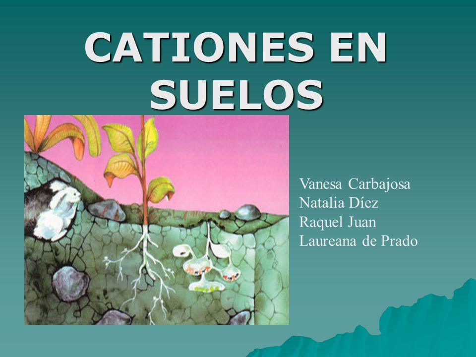 CATIONES EN SUELOS Vanesa Carbajosa Natalia Díez Raquel Juan