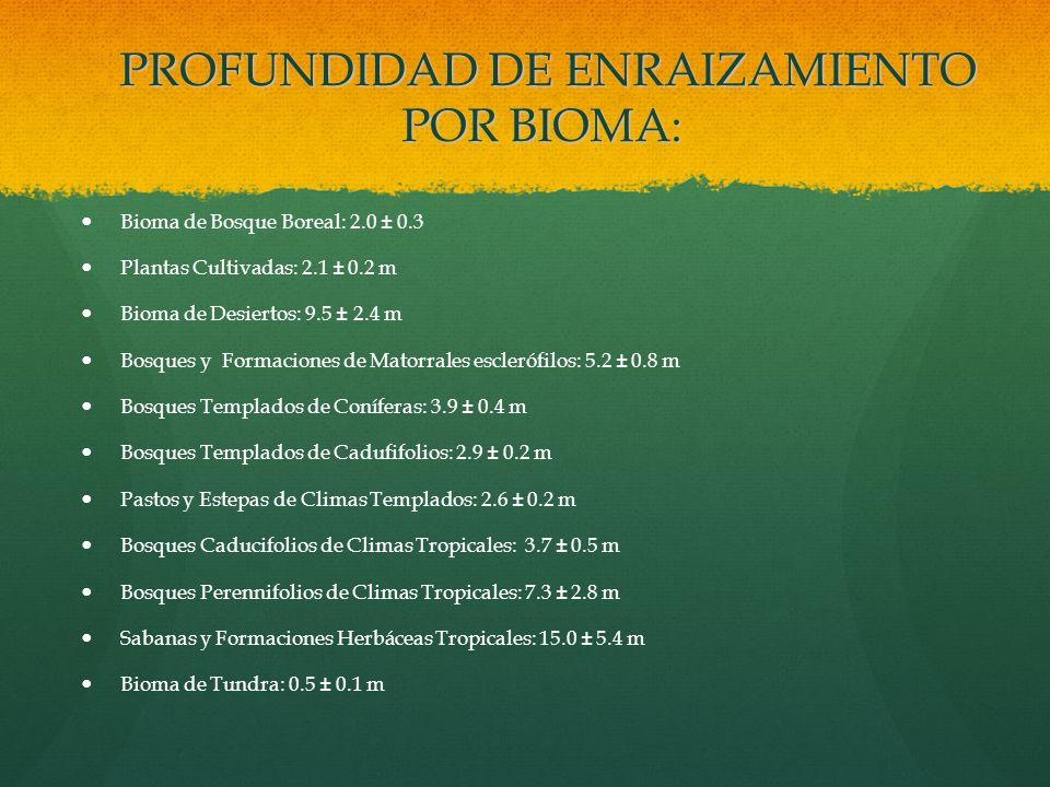 PROFUNDIDAD DE ENRAIZAMIENTO POR BIOMA: