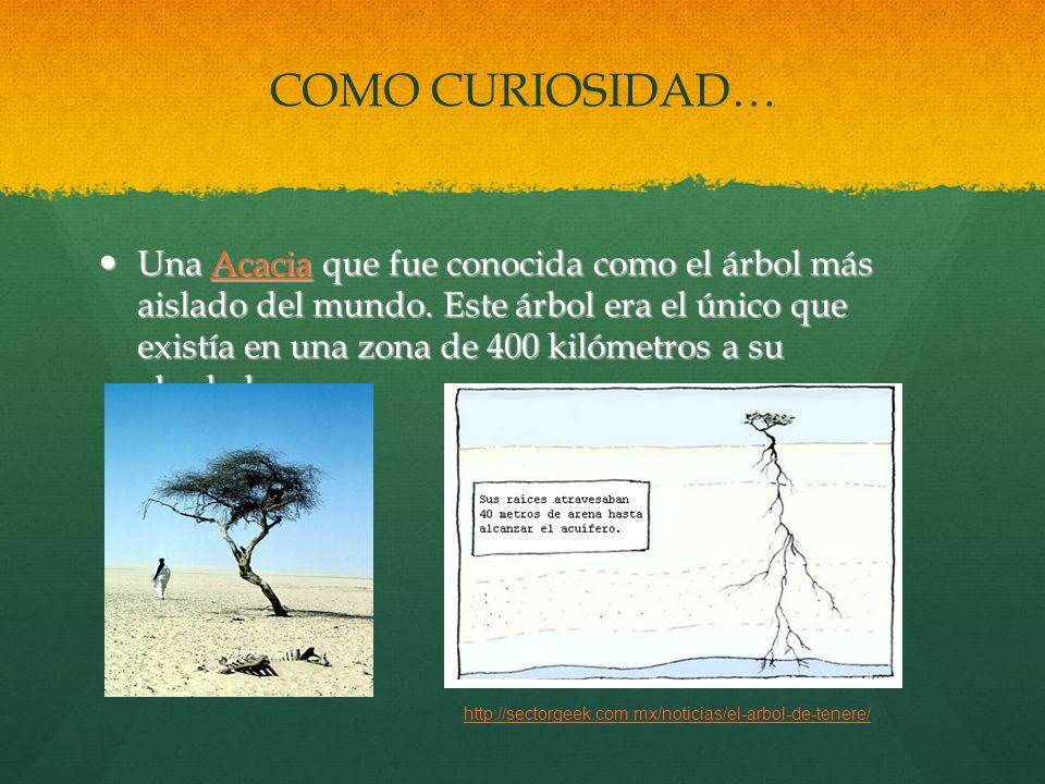 COMO CURIOSIDAD…