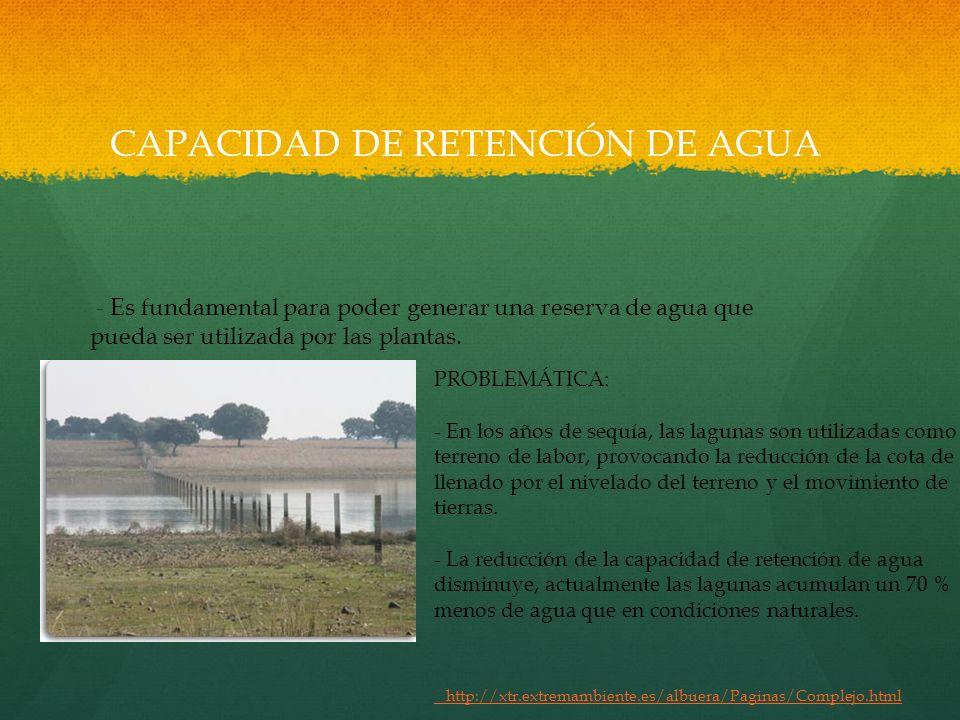 CAPACIDAD DE RETENCIÓN DE AGUA
