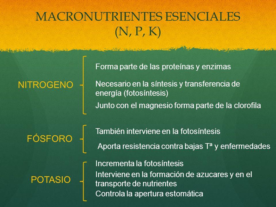 MACRONUTRIENTES ESENCIALES (N, P, K)