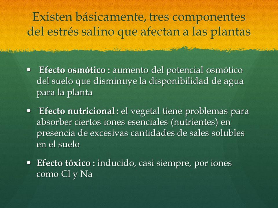 Existen básicamente, tres componentes del estrés salino que afectan a las plantas