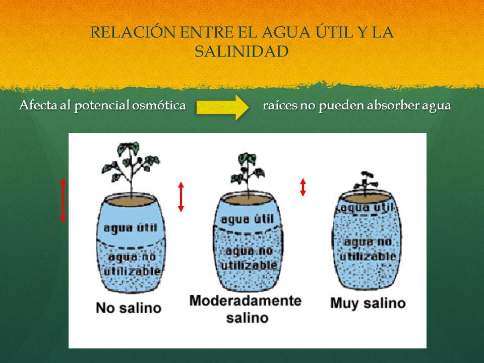 RELACIÓN ENTRE EL AGUA ÚTIL Y LA SALINIDAD