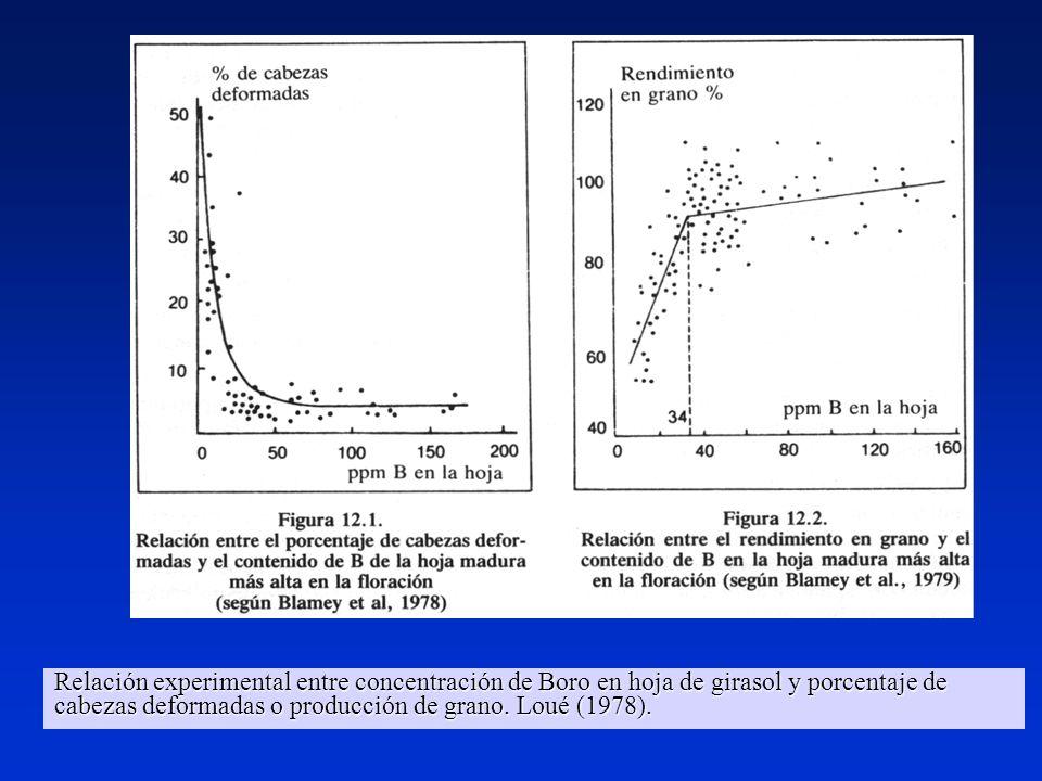 Relación experimental entre concentración de Boro en hoja de girasol y porcentaje de