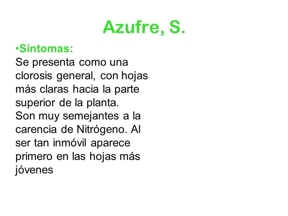 Azufre, S.Síntomas: Se presenta como una clorosis general, con hojas más claras hacia la parte superior de la planta.