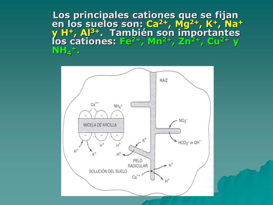 Los principales cationes que se fijan en los suelos son: Ca2+, Mg2+, K+, Na+ y H+, Al3+.