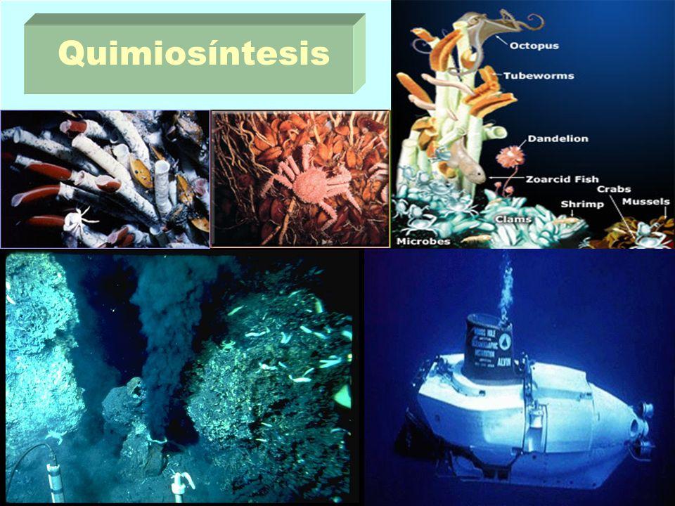 Quimiosíntesis