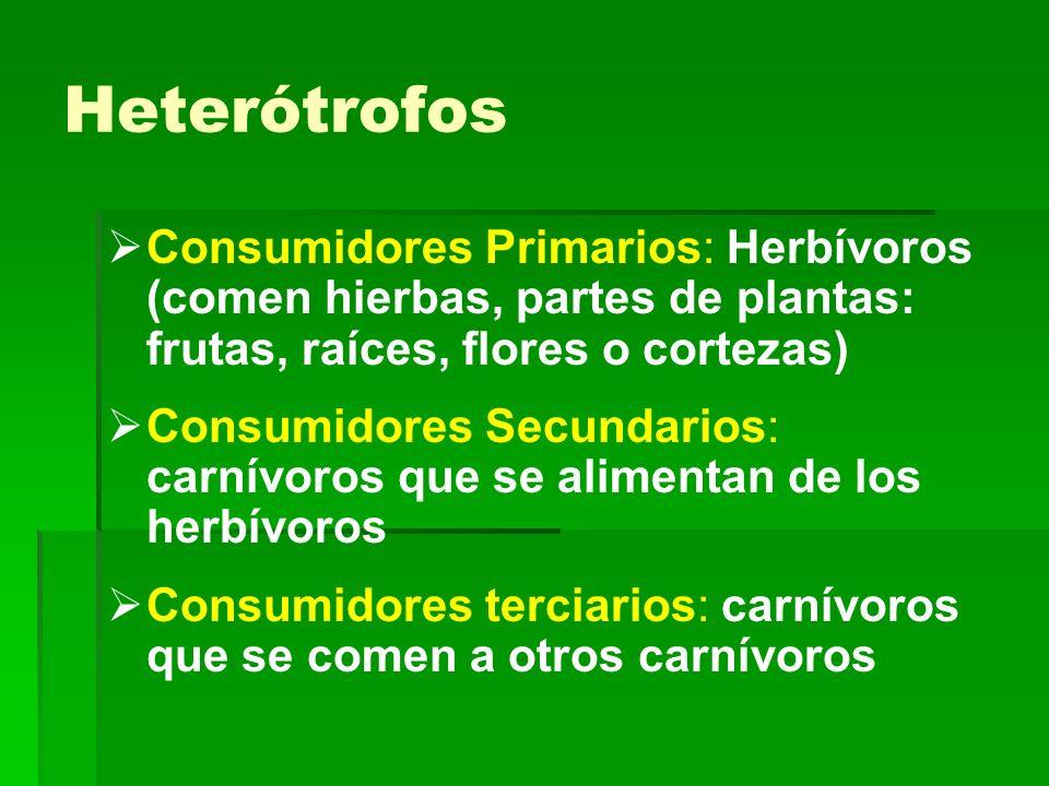 Heterótrofos Consumidores Primarios: Herbívoros (comen hierbas, partes de plantas: frutas, raíces, flores o cortezas)