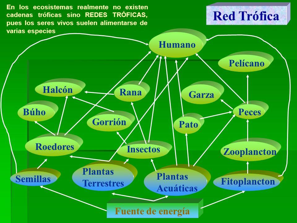 Red Trófica Humano Pelícano Halcón Rana Garza Búho Peces Gorrión Pato