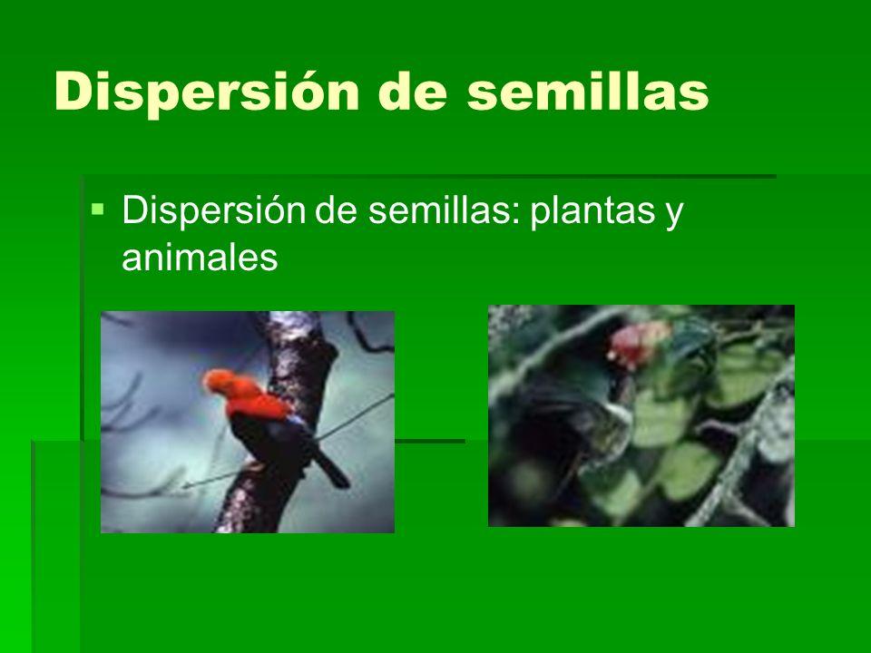 Dispersión de semillas