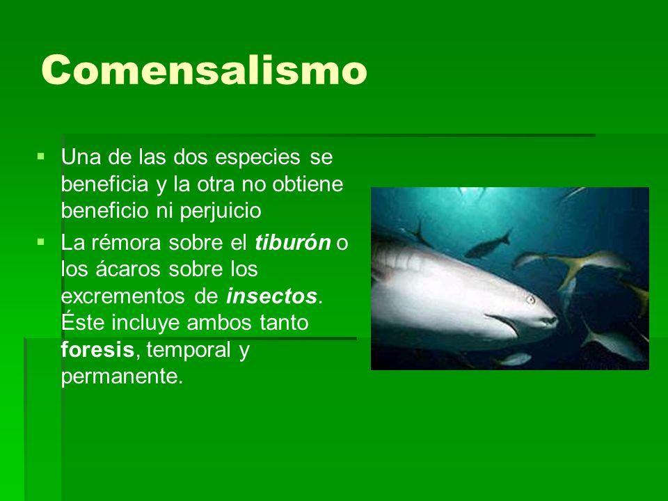 Comensalismo Una de las dos especies se beneficia y la otra no obtiene beneficio ni perjuicio.
